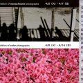 時は春brilliant color exhibition  写真グループ展/金川信江(43新高C)